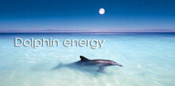 Dolphin meditation image type
