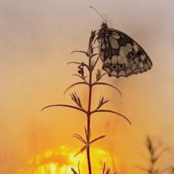 butterfly_sunset-001