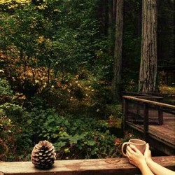 forest_coffee_hands-001