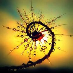 spiral_dew-001