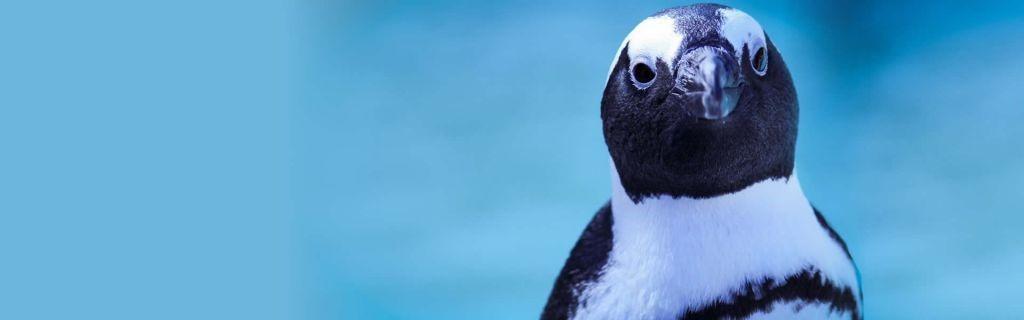 venue info penguin