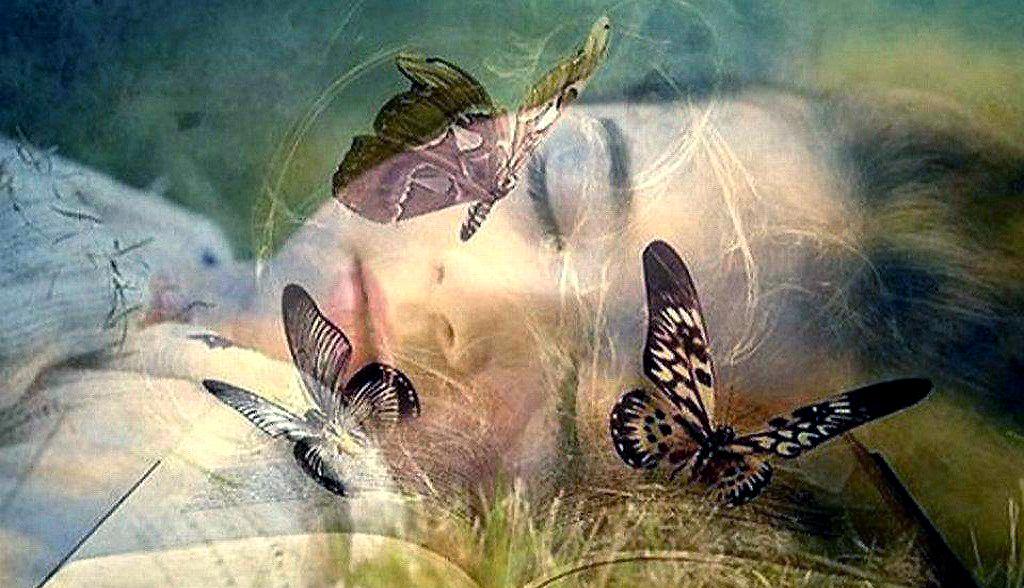 butterfly-dreams